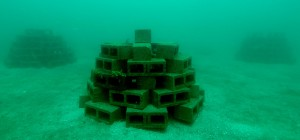 adrian-stacey-artificial-reef-cropped